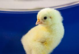 L'uovo, la gallina e la vite: intuizioni geniali, in grado di rivoluzionare un mercato