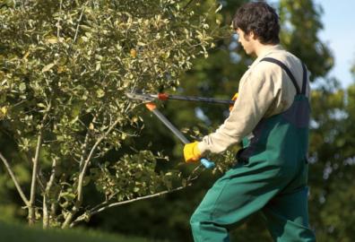 Cesoie, zappe, rastrelli: scopri tutte le attrezzature per la manutenzione del verde!