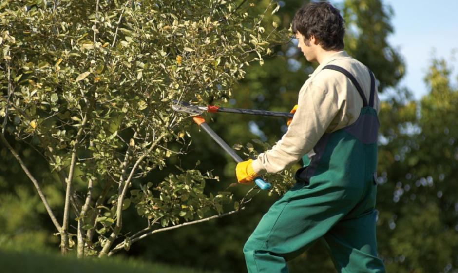I migliori prodotti per la manutenzione del verde: cesoie, zappe, rastrelli professionali