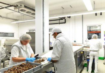 Rapidi, efficaci e sicuri: igienizzanti e sanificanti per industria alimentare